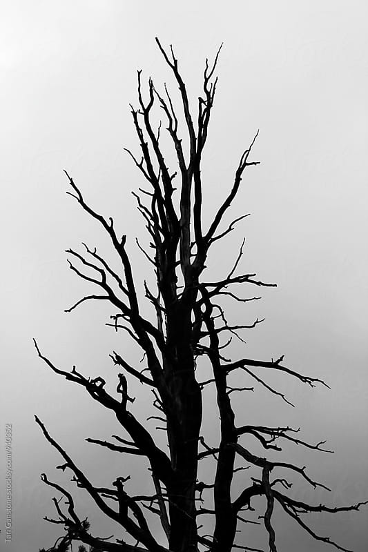 Dramatic silhouette of tree in stormy weather by Tari Gunstone for Stocksy United