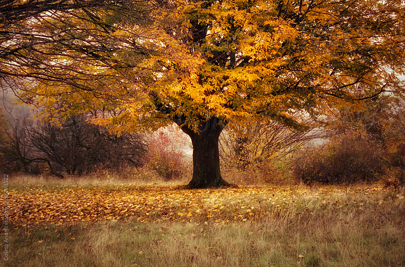 Colorful tree in autumn with fallen yellow and orange leaves by Cosma Andrei for Stocksy United