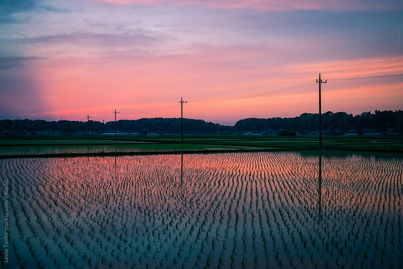 Sunset Over Japanese Rice Fields by Leslie Taylor for Stocksy United