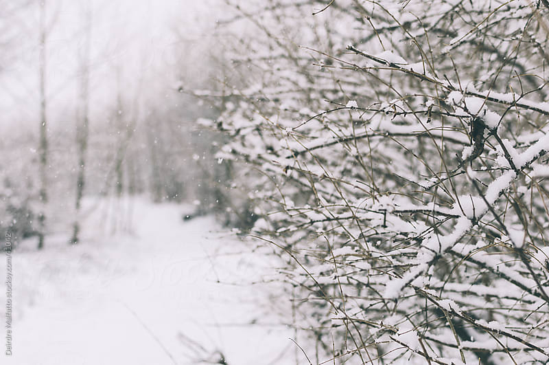 Snowy path through the woods by Deirdre Malfatto for Stocksy United