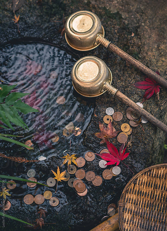 Water Coins and Leaves At A Japanese Temple by Leslie Taylor for Stocksy United