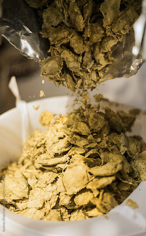 Dry ingredient herbs for craft beer. by Audrey Shtecinjo for Stocksy United
