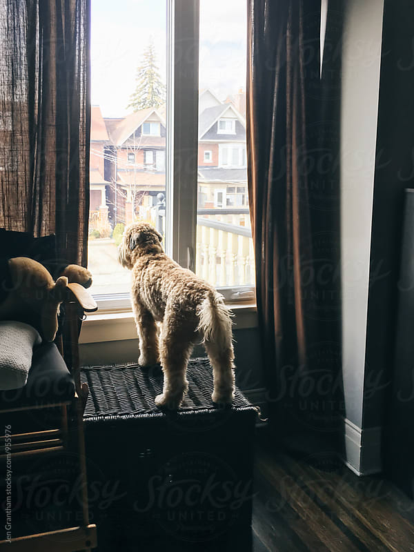 Puppy looking out the window by Jen Grantham for Stocksy United