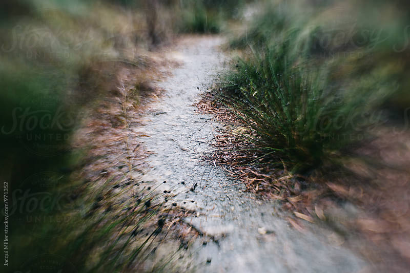 Narrow, man-made walking path through Australian bush, shot with specialty lens by Jacqui Miller for Stocksy United