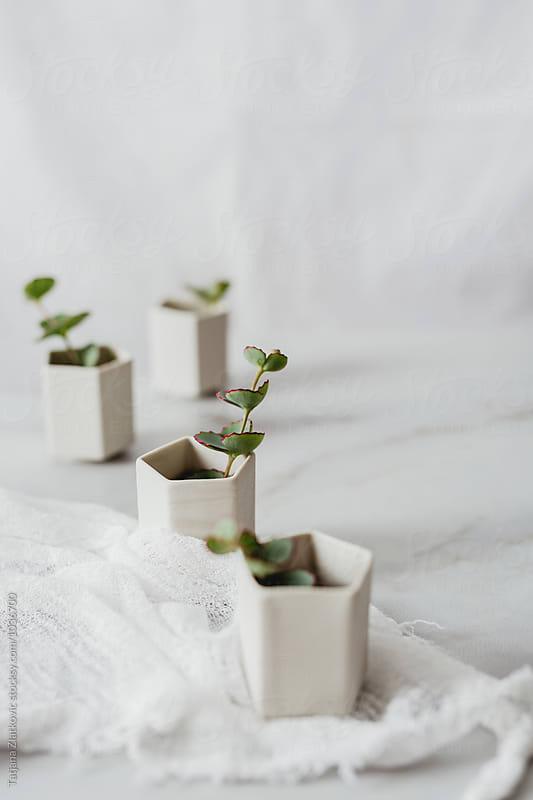Ceramic cups with eucalyptus by Tatjana Ristanic for Stocksy United