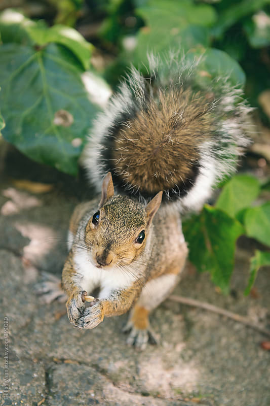 squirrel by Gillian Vann for Stocksy United