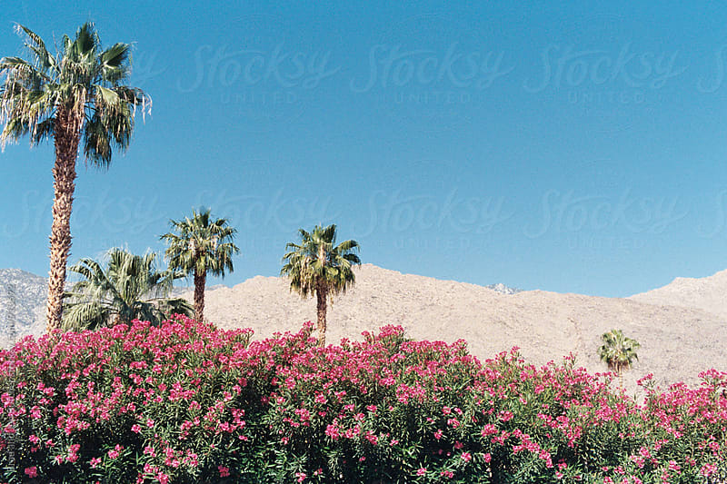 Desert Palms and Flowers by Brad and Jen Butcher for Stocksy United