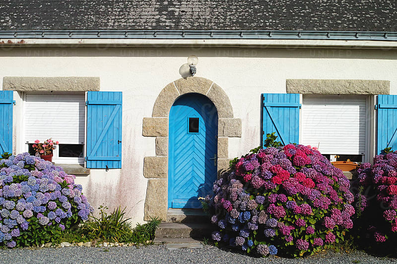 French house with flowering hydrangea bushes by Marcel for Stocksy United