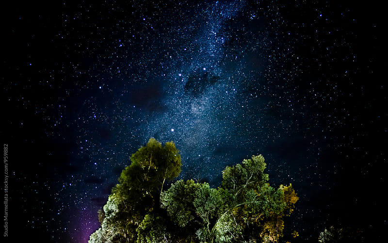 Milky way and eucalyptus trees by Juri Pozzi for Stocksy United