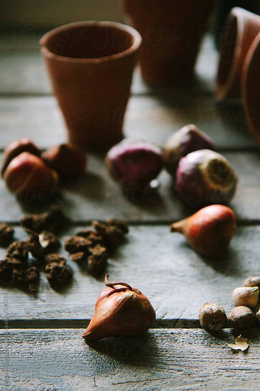 Various spring bulbs ready for planting. by Helen Rushbrook for Stocksy United