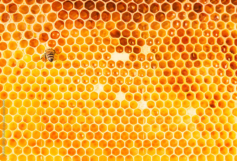 Honeycomb by Julien L. Balmer for Stocksy United