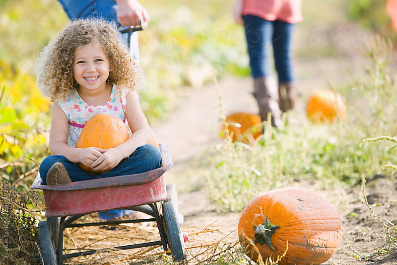 Pumpkins: Little Girl Gets Wagon Ride In Pumpkin Patch by Sean Locke for Stocksy United
