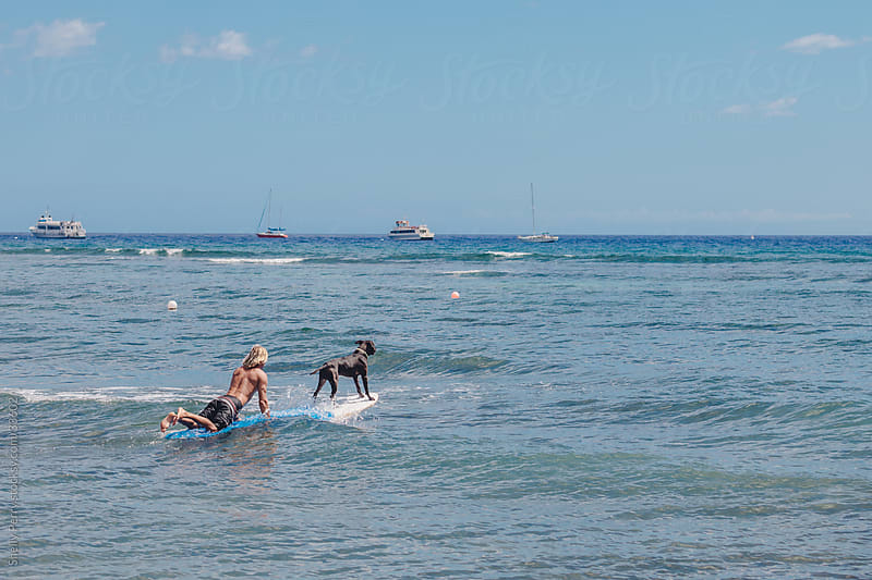Surfer with his Surfing Dog Paddling Out to the Waves by Shelly Perry for Stocksy United