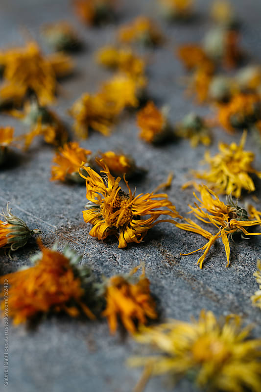 Marigold flowers dried by Gabriel (Gabi) Bucataru for Stocksy United