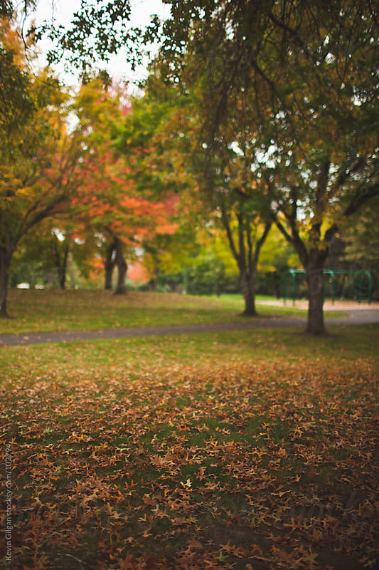 Autumn Leaves on Grass by Kevin Gilgan for Stocksy United