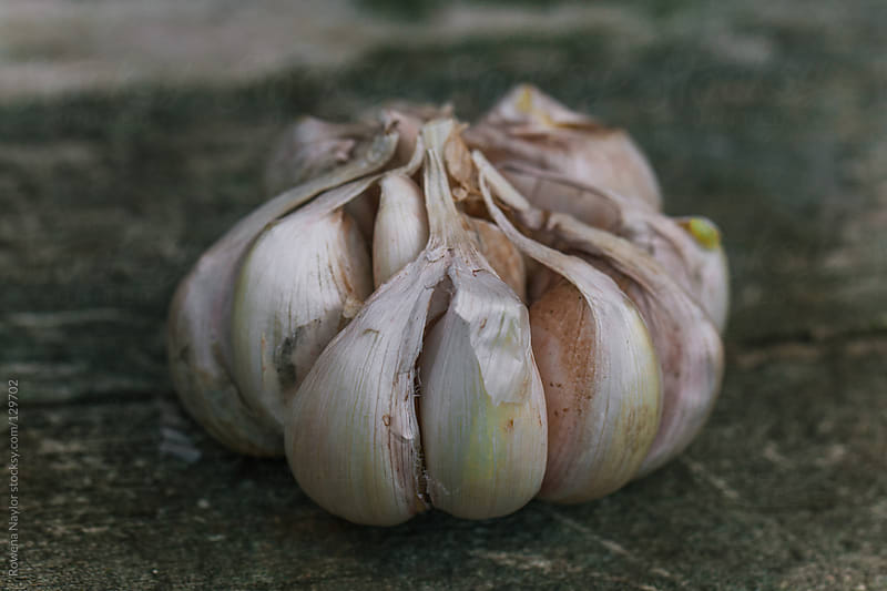 Garlic Bulbs for Planting by Rowena Naylor for Stocksy United