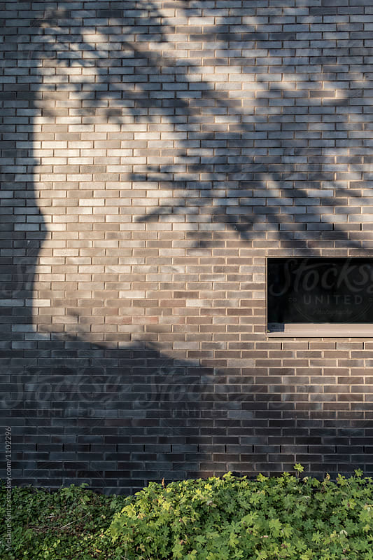 A tree casts a shadow on a building and a window by Melanie Kintz for Stocksy United