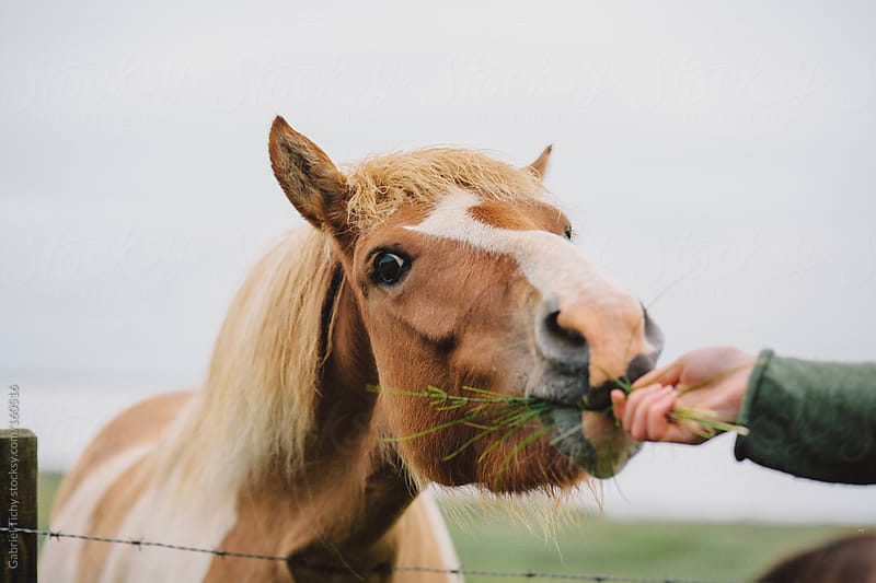 Feeding a horse by Gabriel Tichy for Stocksy United