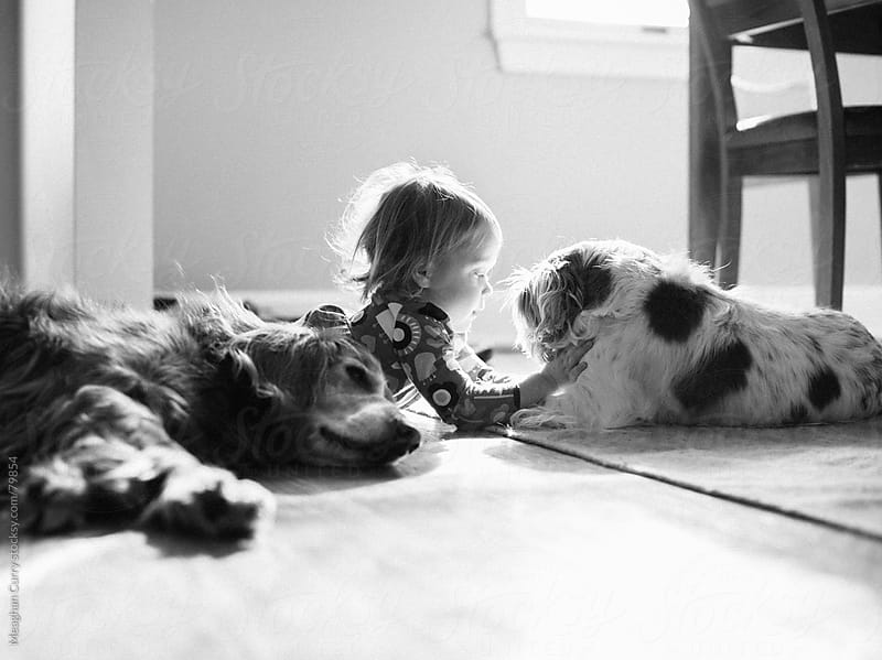 child laying with her two dogs by Meaghan Curry for Stocksy United