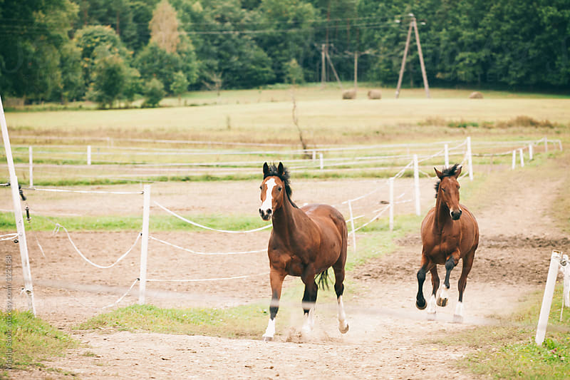 Horses galloping free in nature. by Marija Savic for Stocksy United