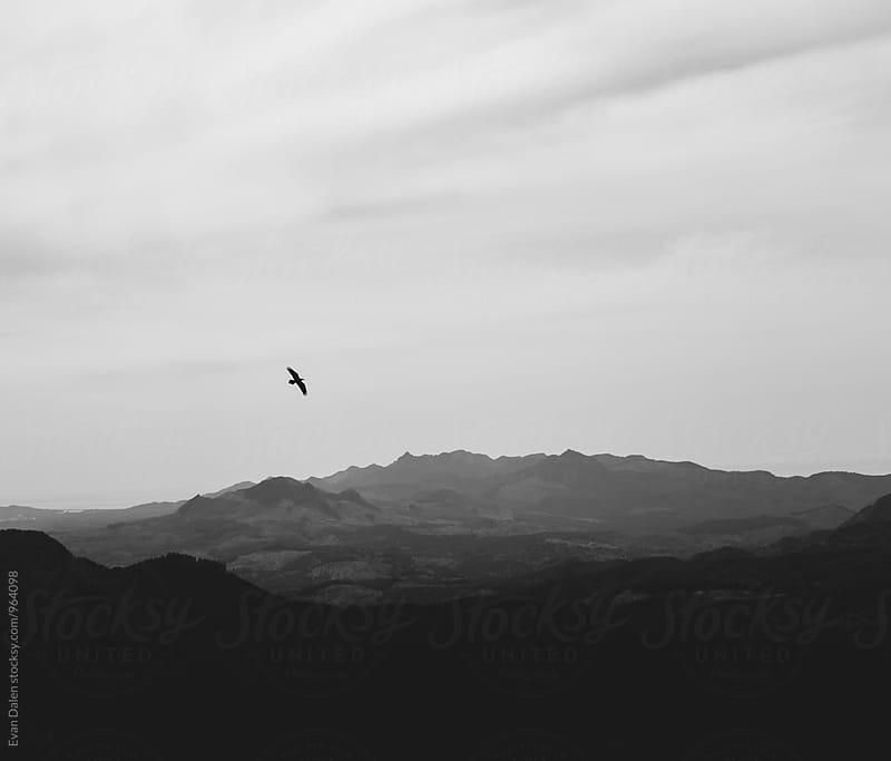 Bird Flying Over Mountain Range by Evan Dalen for Stocksy United