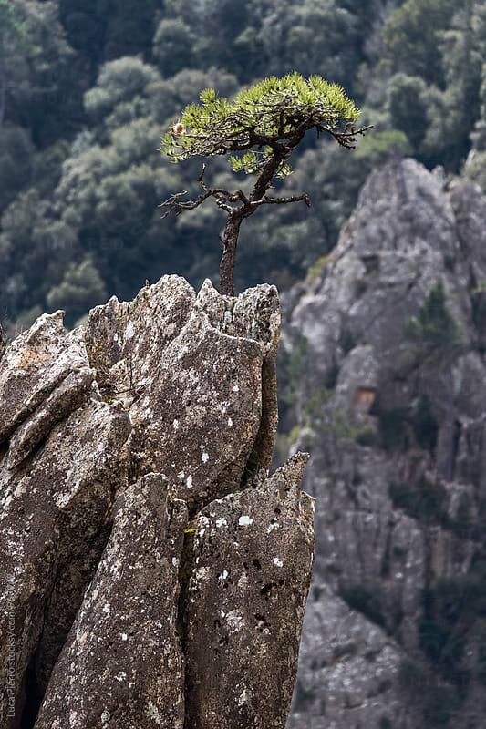 Little tree on a rock by Luca Pierro for Stocksy United