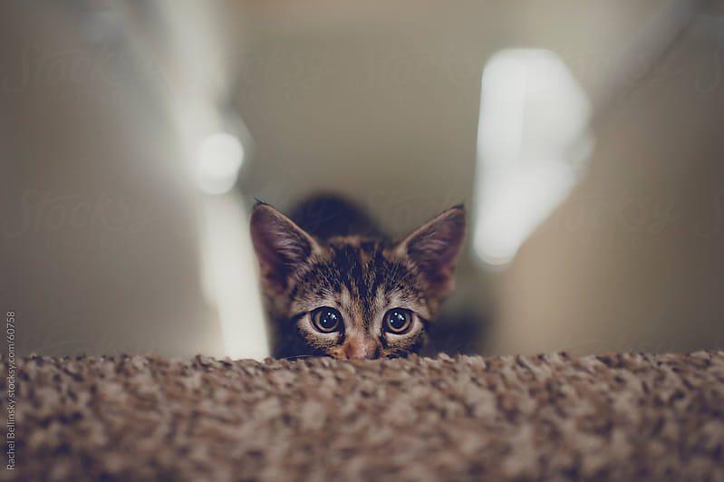 Kitten hides playfully on the stairs by Rachel Bellinsky for Stocksy United