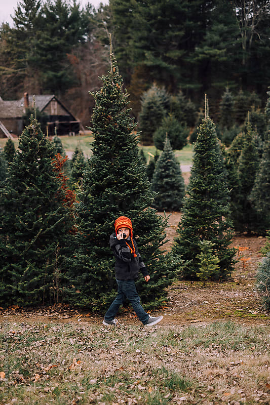 child walking in christmas tree farm by Léa Jones for Stocksy United