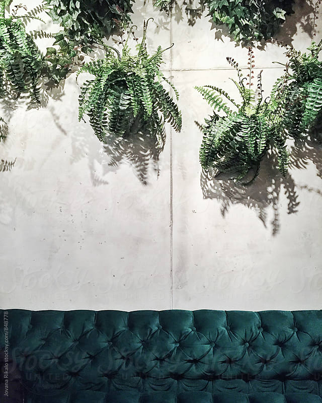 Plants and green sofa by Jovana Rikalo for Stocksy United