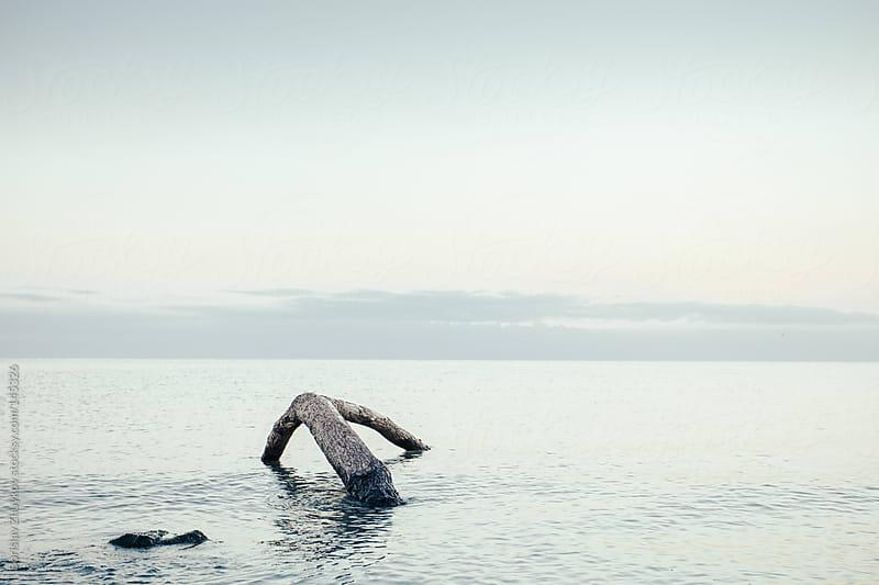 Dead tree in the sea by Borislav Zhuykov for Stocksy United