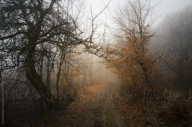 Road trough a mysterious forest with fog and tree with orange leaves by Cosma Andrei for Stocksy United