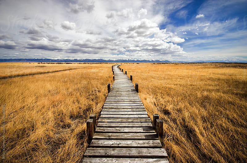 Trail in a Prairie by Brian Koprowski for Stocksy United