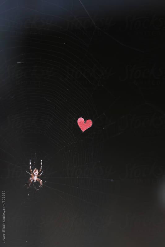 Spider love by Jovana Rikalo for Stocksy United