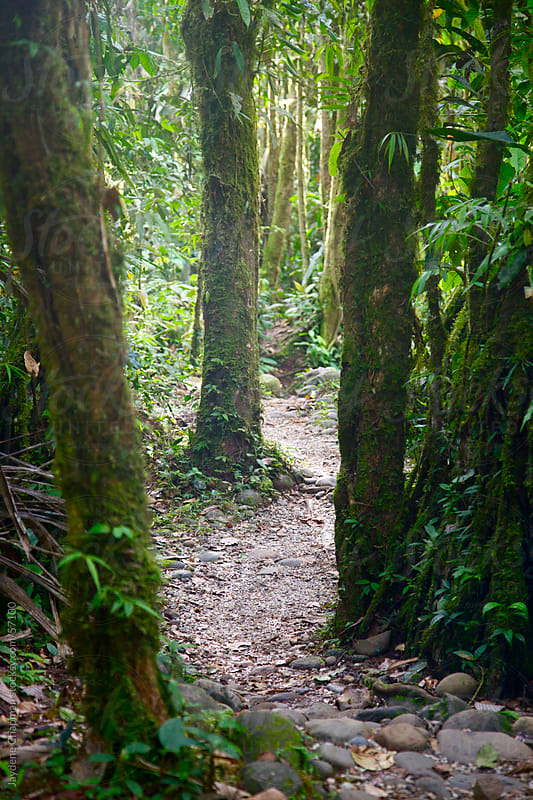 A scenic lush green stoney jungle path weaving between vine wrapped trees, Ecuador by Jaydene Chapman for Stocksy United