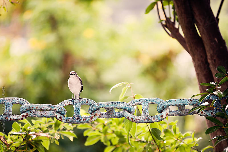 Small bird sitting leisurly on an old rusted chain fence by anya brewley schultheiss for Stocksy United