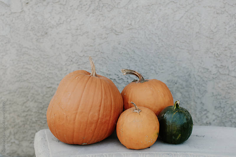 Pumpkins against Grey Wall by Sidney Morgan for Stocksy United