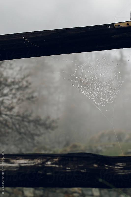 Spider web in a misty morning  by Jordi Rulló for Stocksy United