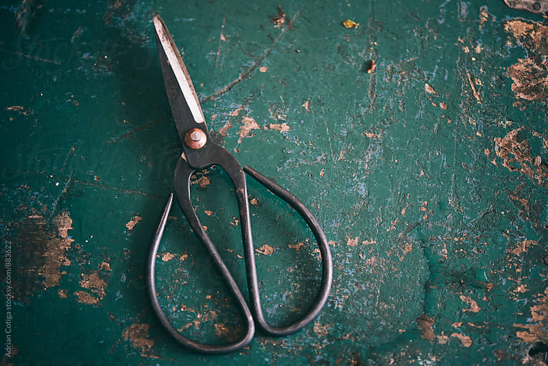 Old florist's scissors on a blue wooden table. by Adrian Cotiga for Stocksy United