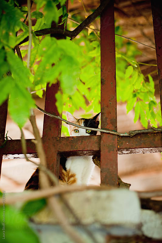 Cat hiding behind rusty iron fence on wall in garden by Laura Stolfi for Stocksy United