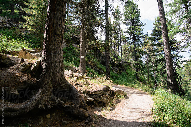 HIking trail inside alpine forest by Peter Wey for Stocksy United