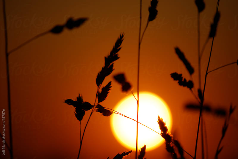 Orange sun and wheat by Jeff Marsh for Stocksy United