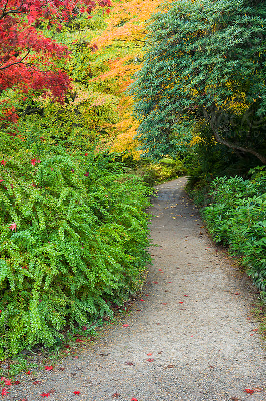 Arboretum trail in Autumn by Mark Windom for Stocksy United