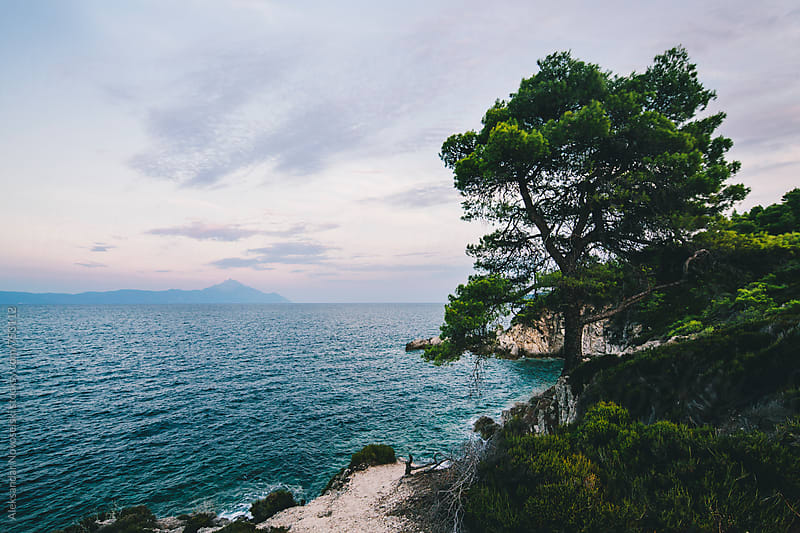 Seascape with tree and rocky coast infront and Athos in the background by dusk by Aleksandar Novoselski for Stocksy United