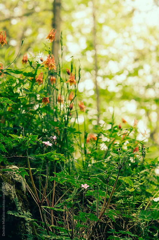 Various spring wildflowers growing in a forest by Deirdre Malfatto for Stocksy United