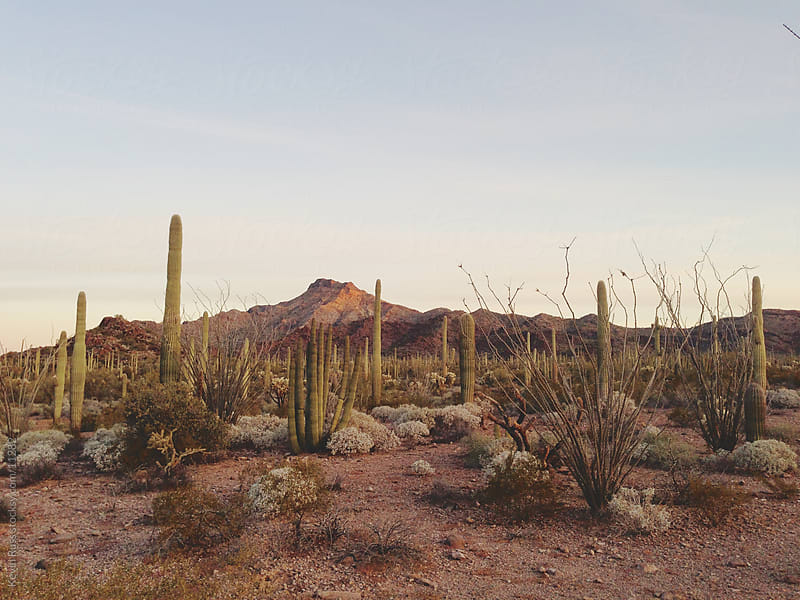 Cactus and Mountian by Kevin Russ for Stocksy United