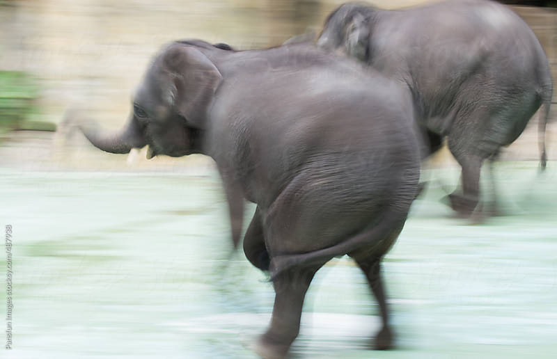 elephants running by Pansfun Images for Stocksy United