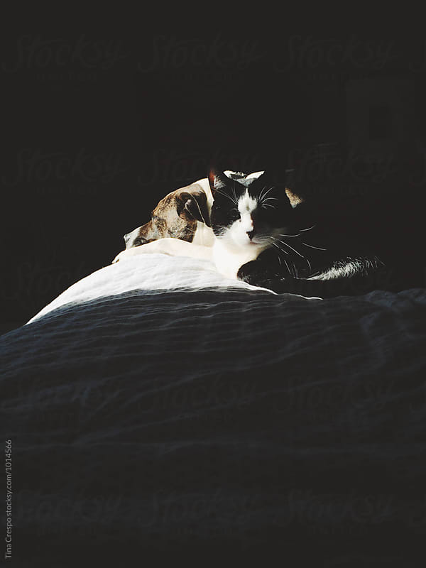 A dog and cat in shadows by Tina Crespo for Stocksy United
