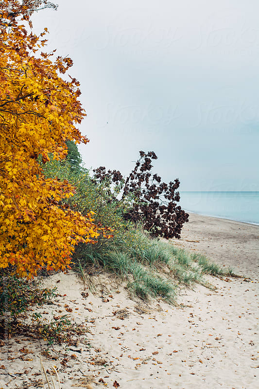Fall leaves on a tree by a lake beach by Gabriel (Gabi) Bucataru for Stocksy United