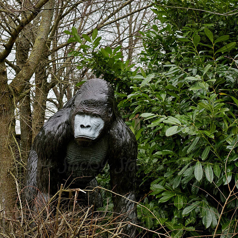 Plastic gorilla in the bushes by Marcel for Stocksy United