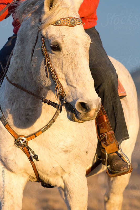 A horse turns his head into the setting sun while on a ride by Tana Teel for Stocksy United